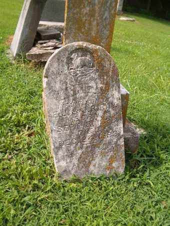 RAY, JIMMIE P. - Lauderdale County, Tennessee | JIMMIE P. RAY - Tennessee Gravestone Photos