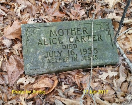 CARTER, ALICE - Lincoln County, Tennessee | ALICE CARTER - Tennessee Gravestone Photos
