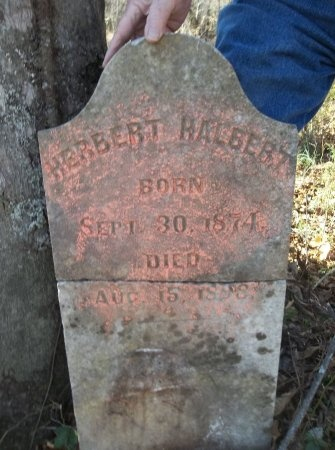 HALBERT, HERBERT - Lincoln County, Tennessee | HERBERT HALBERT - Tennessee Gravestone Photos