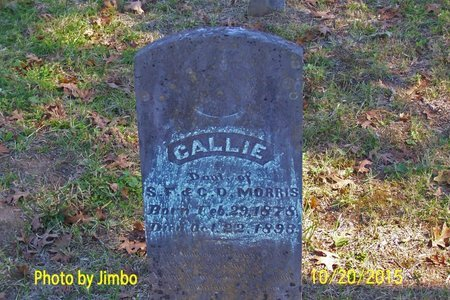 MORRIS, CALLIE - Lincoln County, Tennessee | CALLIE MORRIS - Tennessee Gravestone Photos