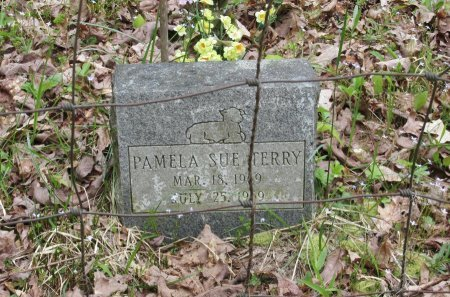 TERRY, PAMELA SUE - Pickett County, Tennessee | PAMELA SUE TERRY - Tennessee Gravestone Photos