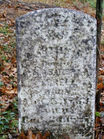 WARD, MARTHA A. - Rutherford County, Tennessee | MARTHA A. WARD - Tennessee Gravestone Photos
