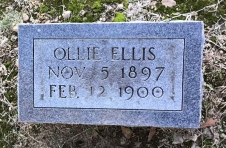 ELLIS, OLLIE - Shelby County, Tennessee | OLLIE ELLIS - Tennessee Gravestone Photos