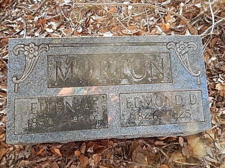 MORTON, EDMOND DINWITTIE - Shelby County, Tennessee | EDMOND DINWITTIE MORTON - Tennessee Gravestone Photos
