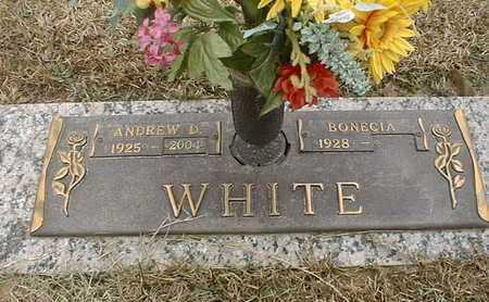WHITE, ANDREW D - Bowie County, Texas | ANDREW D WHITE - Texas Gravestone Photos