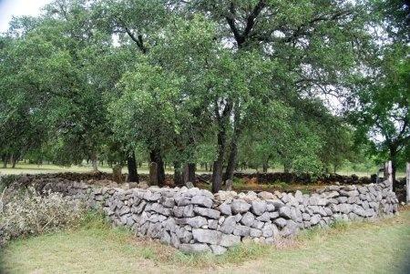 *HAAG OVERVIEW,  - Comal County, Texas |  *HAAG OVERVIEW - Texas Gravestone Photos