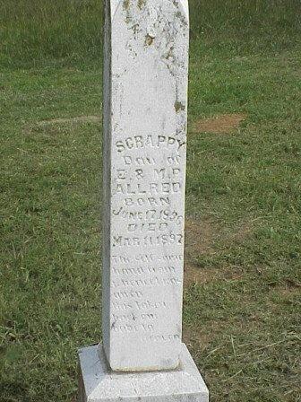 ALLRED, SCRAPPY - Grayson County, Texas   SCRAPPY ALLRED - Texas Gravestone Photos