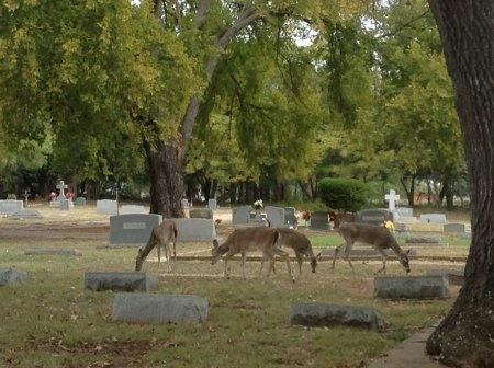 *CEMETERY VISITORS,  - Hays County, Texas |  *CEMETERY VISITORS - Texas Gravestone Photos