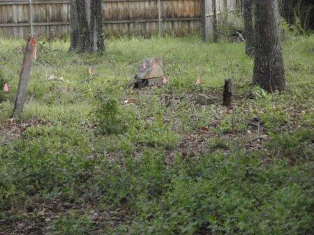 *CEMETERY VIEW,  - Lamar County, Texas |  *CEMETERY VIEW - Texas Gravestone Photos