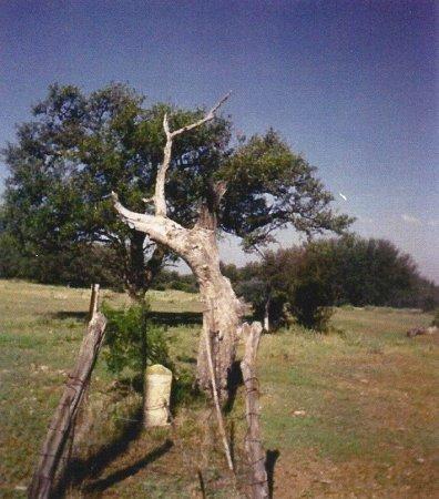 *VIEW,  - Mills County, Texas |  *VIEW - Texas Gravestone Photos