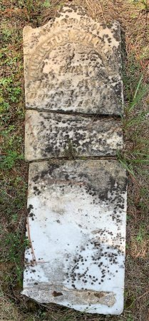 WILLIAMS, AUGUSTUS - Morris County, Texas | AUGUSTUS WILLIAMS - Texas Gravestone Photos
