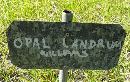 WILLIAMS, OPAL (FHM) - Morris County, Texas | OPAL (FHM) WILLIAMS - Texas Gravestone Photos