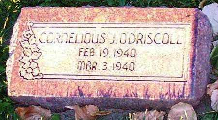 O'DRISCOLL, CORNELIOUS JOY - Duchesne County, Utah   CORNELIOUS JOY O'DRISCOLL - Utah Gravestone Photos