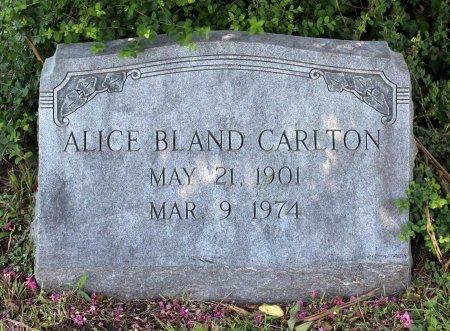 BLAND CARLTON, ALICE - King William County, Virginia   ALICE BLAND CARLTON - Virginia Gravestone Photos