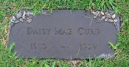 CURD, DAISY MAE - Portsmouth (City of) County, Virginia | DAISY MAE CURD - Virginia Gravestone Photos