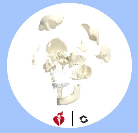 Cranial Bones - Skull