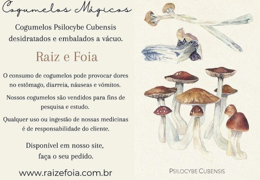 Cogumelos Mágicos - Psilocybe Cubensis