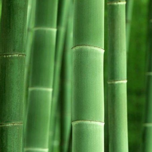 Óleo Essencial de Bamboo