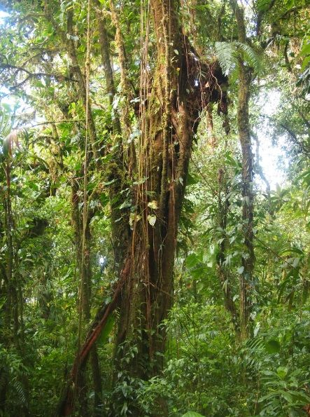 Óleo Essencial de Floresta