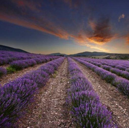 Óleo Essencial de Provence