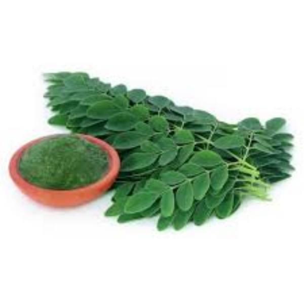 Chá de Moringa Oleifera – Granel – 100gr