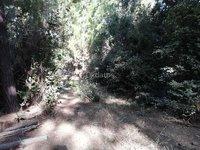 """Parcelas de Agrado """"Bosques de Pichilemu"""""""