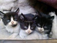 Gatitos regalones buscan un hogar que los quiera