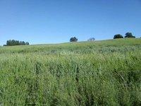 Se vende 23 hectáreas, El Carmen