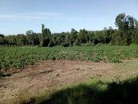 Se vende Parcela de 8,8 hectáreas, El Carme