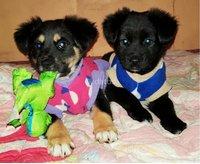 Hermosos Cachorros en adopción.