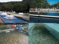 Servicio de limpieza y desinfección Puerto Montt