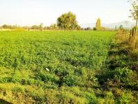 Se Vende Terreno a pasos del Lago Rapel