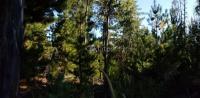 Parcelas Costas de Pichilemu.Inigualable Precio. avisos clasificados gratis