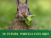 ACA ESTA SU FUTURA PARCELA!!