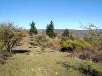 Linda vista, vegetación y fácil acceso