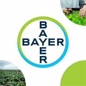08 Bayer 500x500
