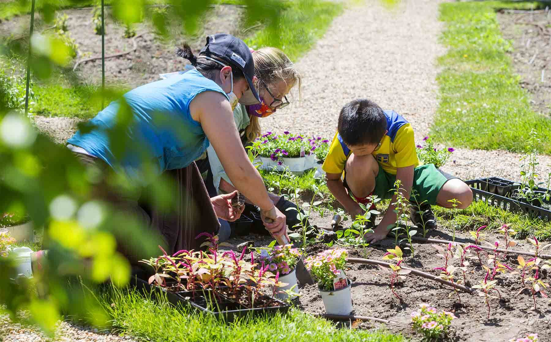 A young boy and two women setting plants into a garden.