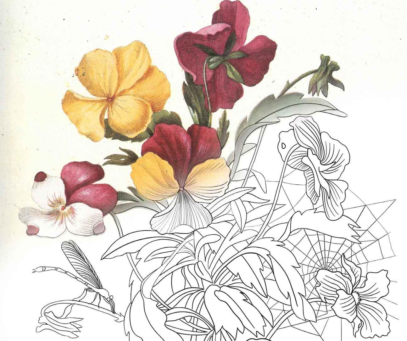 Garden Pansy (No. 10)