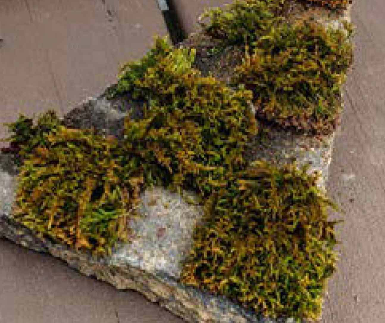 Drop-in Art Making Moss Graffiti