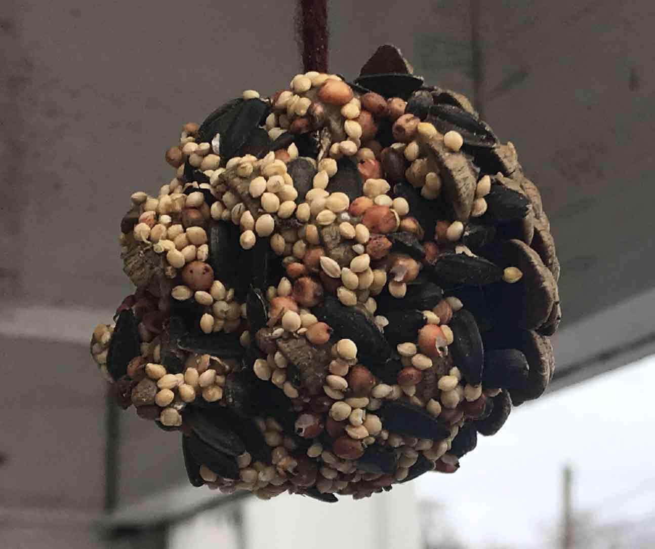 Birdseed Pinecones