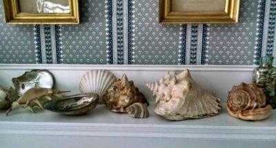 Eliza's seashell collection. Photo courtesy of Angela Segalla
