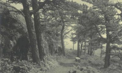 Ocean Path trail