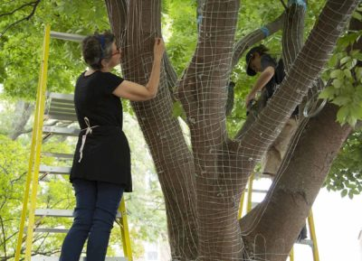 Sculptor Elizabeth Keithline modeling wire on a live tree from PEM's campus.