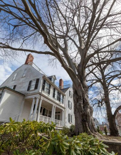 Tall beech tree behind the Ropes Mansion