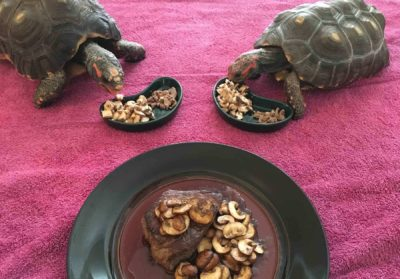 turtles and dish