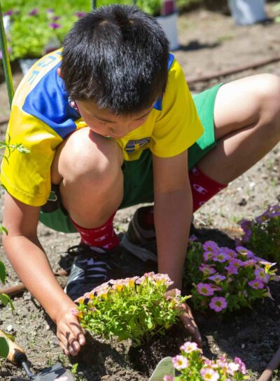 A young squatting boy plants pink flowers in the dirt.