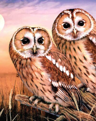 A painting of two golden brown and white owls facing the viewer perched on a branch