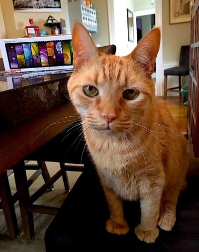 An orange tabby cat sitting on a table facing the viewer