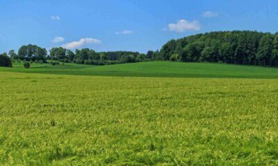 A green grassy field with trees on horizon and blue sky