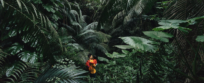 Vegetation, Plant, Rainforest, Land, Tree, Nature, Outdoors, Jungle, Bird, Woodland